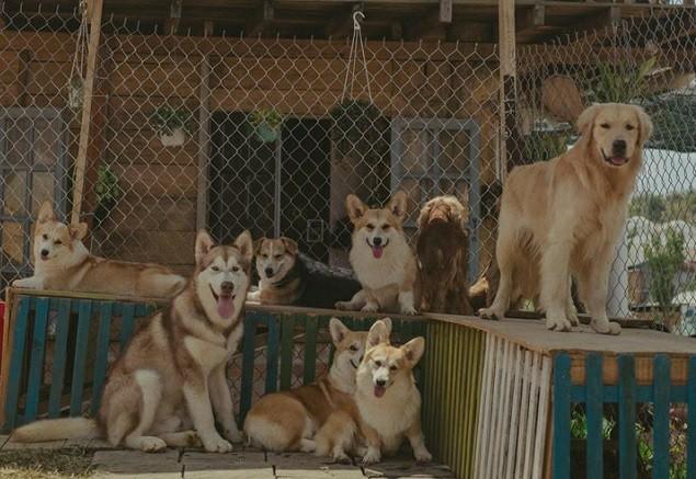 Tổng giá trị đàn chó của Minh Trí lên đến trên 2 tỷ đồng (ảnh nhân vật cung cấp).