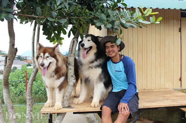 Minh Trí bên chú chó Alaska tên Ben (màu đen trắng) 3,5 tuổi, con của hai chú chó đầu tiên 9X nuôi. Ảnh: Văn Long.
