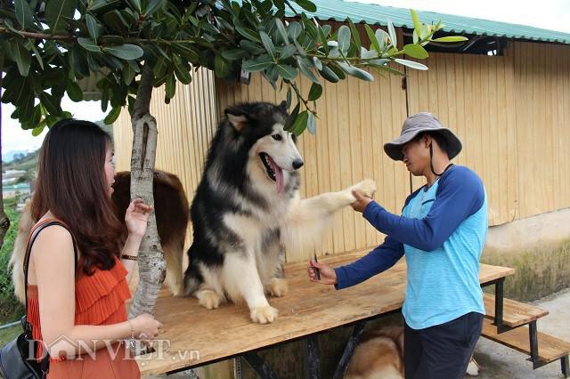 Chăm sóc những chú chó, công việc thường ngày của chàng trai 9X Minh Trí. Ảnh: Văn Long.