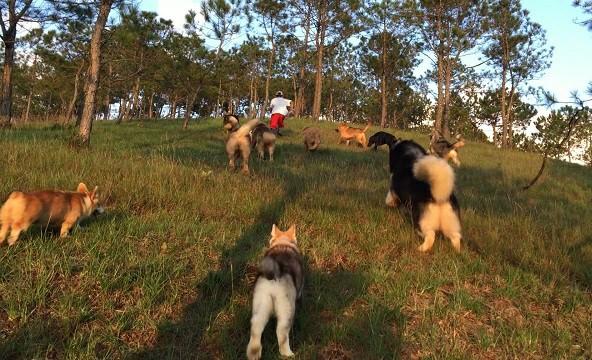 Một ngày dã ngoại của những chú chó khi được vui đùa trên những đồi thông (ảnh nhân vật cung cấp).