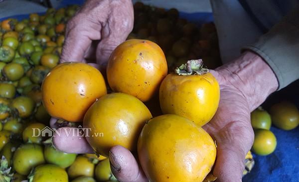 Những trái hồng vàng, bóng mượt này đã giúp người dân nơi đây có thu nhập hàng trăm triệu đồng/năm.
