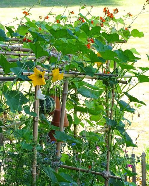 Cậu chia sẻ, mỗi lần ngồi trong vườn, tỉ mỉ chăm chút từng mầm nhỏ, mọi âu lo và mệt mỏi tan biến.