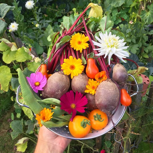 Ít lâu sau, chàng trai người Bỉ có thể tự tay cải tạo miếng đất nhỏ và trồng thử vài loại rau như bí ngòi, cà rốt... trên khu vườn của riêng mình.