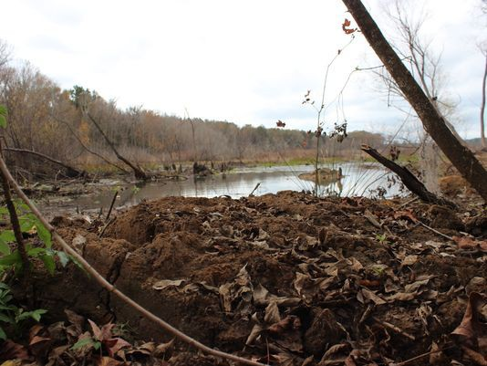 Khu vực nơi hài cốt Jerry bị chôn vùi dưới lớp đất sâu.
