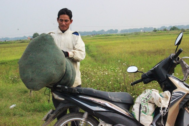 Châu chấu được thương lái mua với giá rất cao, trung bình từ 70.000 đồng - 120.000/kg. Trung bình mỗi người cũng kiếm được hơn 1 triệu đồng/ngày.