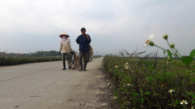 """Những người """"thợ săn"""" rời cánh đồng thôn Liên Minh sang cánh đồng khác để tiếp tục công việc tìm bắt châu chấu cũng là thời điểm đã gần giờ nghỉ trưa, trời đổ nắng gắt."""