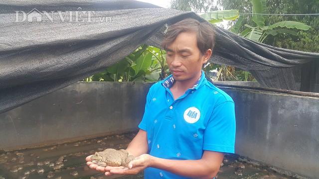 Nhờ nuôi ếch Thái Lan mà mỗi năm gia đình anh Phạm Đăng Tập lãi gần nửa tỷ đồng.