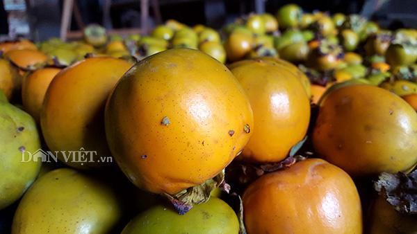 Những trái hồng vàng óng, căng bóng luôn hấp dẫn các thương lái và khách hàng.
