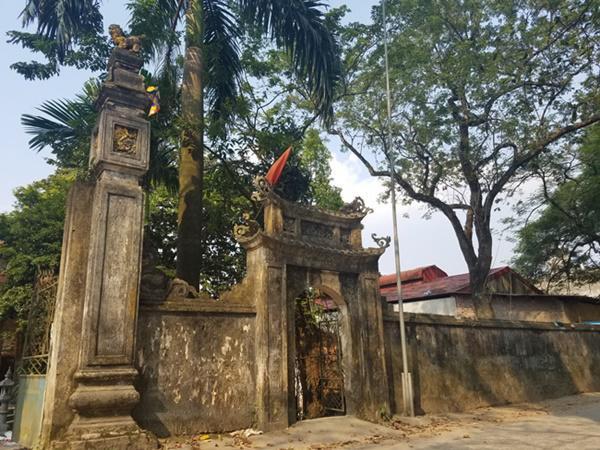 2 cây sưa có tuổi thọ hơn trăm tuổi nằm trong khuôn viên chùa Phụ Chính (Chương Mỹ, Hà Nội).