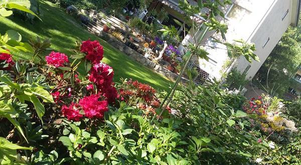 Khu vườn bao quanh căn nhà có diện tích tổng 500m2.