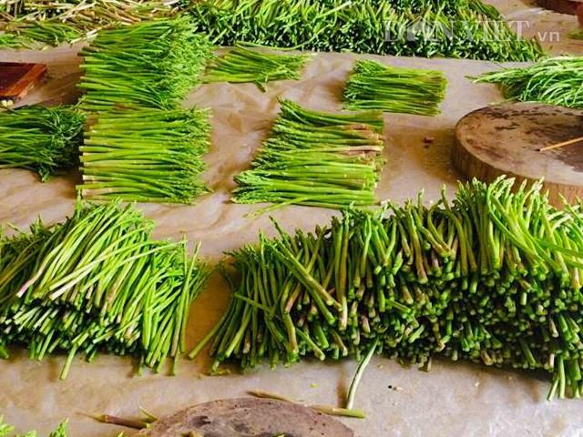 Măng tây xanh sau khi thu hoạch được phân loại và đóng gói, chuyển đi Hà Nội tiêu thụ