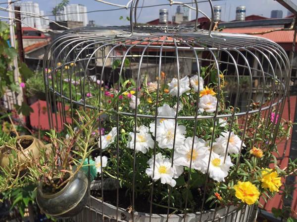 Ngoài rau củ chị còn trồng thêm hoa để khu vườn có thêm màu sắc.