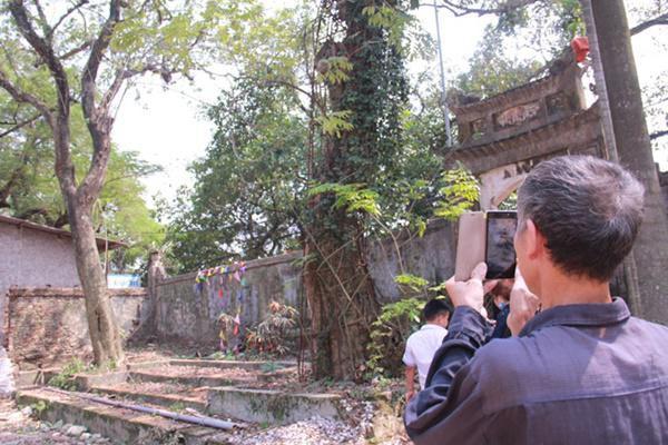 Khi nghe tin gỗ sưa làng Phụ Chính sắp được đấu giá và là loại cây gỗ cực hiếm, ông Nguyễn Hữu Bội, 57 tuổi có 40 năm thâm niên nghề mộc, quê Quảng Bị xuống thăm quan, chụp ảnh lưu giữ làm kỷ niệm.