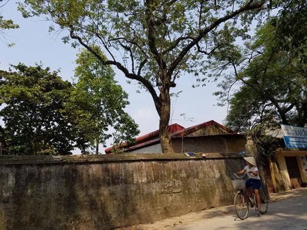 Mỗi khi đi qua chùa, dân làng Phụ Chính luôn hướng mắt về phía cây gỗ sưa.