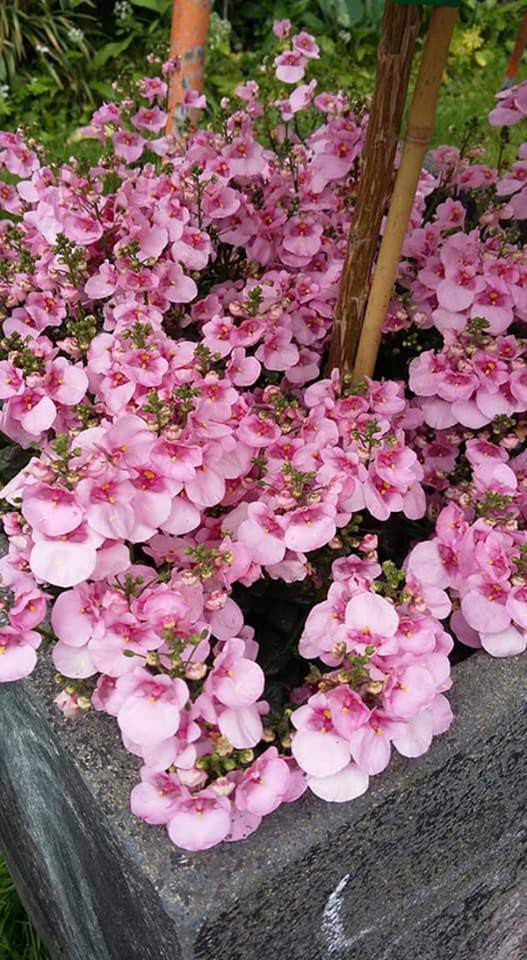 Vào mùa, các loại hoa đồng loạt khoe sắc.