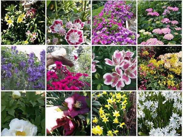 Khu vườn nhà chị không thể đếm nổi có thực sự bao nhiêu loại hoa.