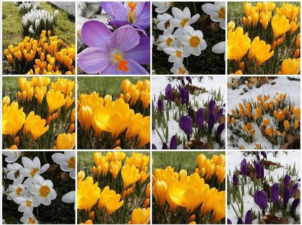 Hoa ngập khắp lối là cảm nhận đầu tiên khi mọi người thấy khi vườn này.
