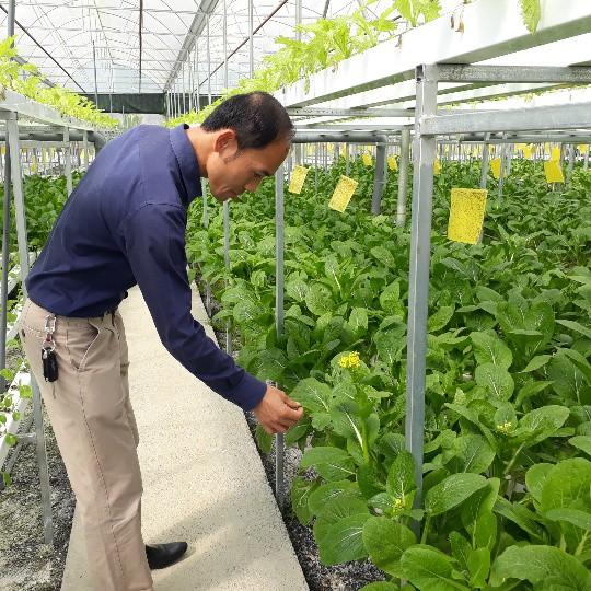 Theo anh Sơn, trồng rau thủy canh giải phóng được các công đoạn lao động nặng nhọc như: Làm đất, làm cỏ...