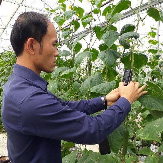 Anh Sơn sử dụng máyđo, kiểm tra dinh dưỡng của cây rau mỗi ngày