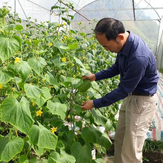 Anh Đào Ngọc Sơn trồng rau thủy canh từ năm 2017