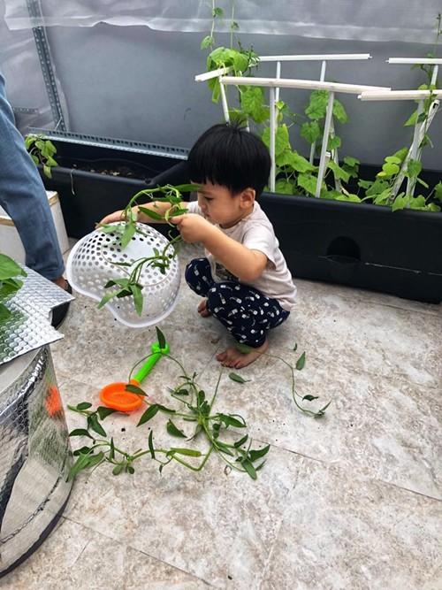 Chiều mát, con trai Ngọc Lan theo chân bố lên sân thượng để phụ hái rau. Diễn viên Thanh Bình nói đùa: nhờ có Louis mà vườn rau... tan hoang.
