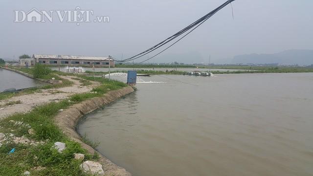 Khu nuôi cá của anh Liêm gồm 5 ao nổi rộng khoảng 2ha mặt nước, chủ yếu thả nuôi các loại cá truyền thống.