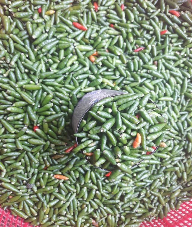 Giá ớt xiêm rừng thấp nhất là 50 ngàn đồng, cao nhất là 150 ngàn đồng mỗi kg.