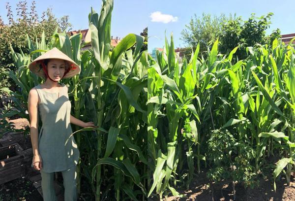 Dù xa quê hương, nhưng chị Ngọc Hà vẫn cảm thấy được an ủi phần nào khi ngắm nhìn thành quả gieo trồng của mình mỗi ngày, vơi đi nỗi nhớ nhà.