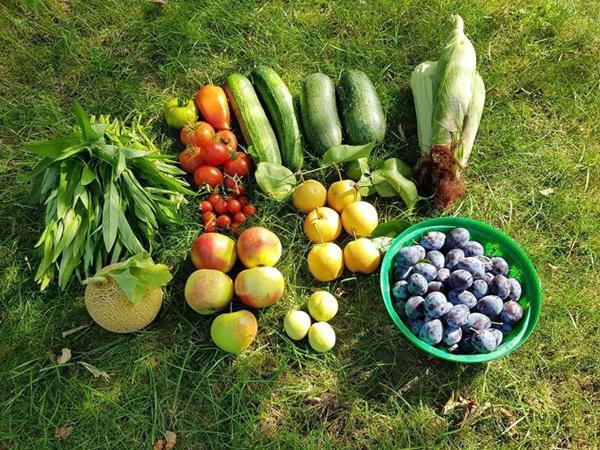 Thành quả trong một lần thu hoạch từ khu vườn của gia đình chị.
