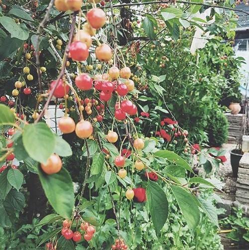 Tại đây vợ chồng cô trồng rau; nuôi gia súc, gia cầm; hưởng thụ cuộc sống tự cung, tự cấp.