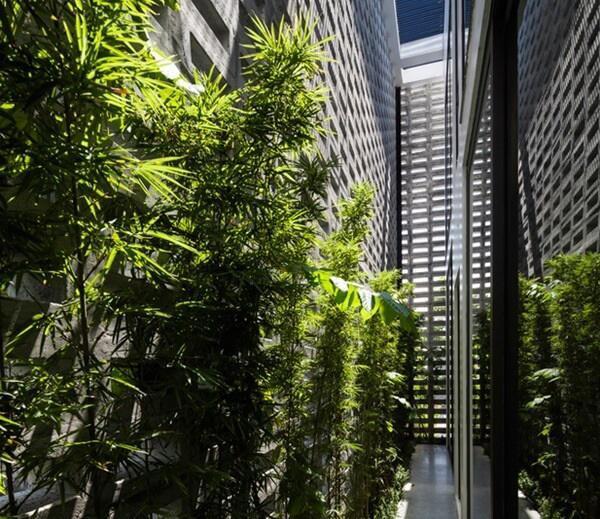 Ở những bức tường này, gia chủ trồng thêm các loại hoa leo, cây cảnh, tạo sự cân bằng, gần gũi với thiên nhiên, đồng thời thêm một lớp cách nhiệt, hấp thụ nhiệt, cho không gian trong nhà luôn thoáng mát.