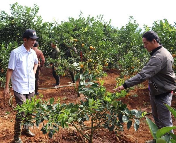 Ông Chất tận tình hướng dẫn khách hàng đến tham quan vườn tược về cách trồng, chăm sóc cam