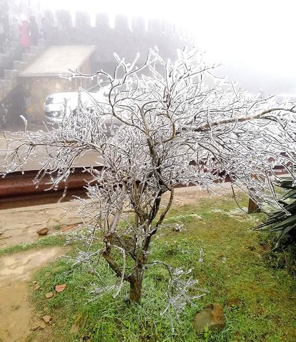 Cây cối phủ kín băng giá.