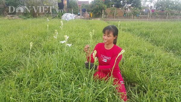 Nhờ trồng loại hoa trắng như mây này mà gia đình chị Hạnh có nguồn thu nhập hàng chục triệu đồng/tháng.