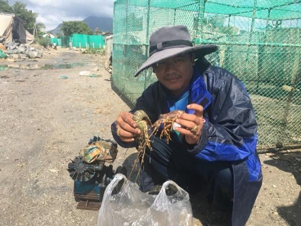 Ông Huỳnh Văn Phong (phường Cam Thuận, Cam Ranh) rầu rĩ với tôm hùm chết, thiệt hại 300 triệu đồng