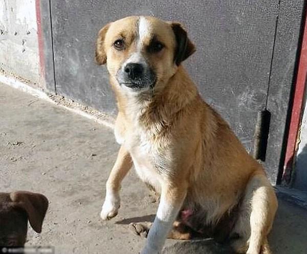 Dinka - con chó lấy được nhiều tình cảm của người dùng mạng vì tình cảm dành cho chủ.
