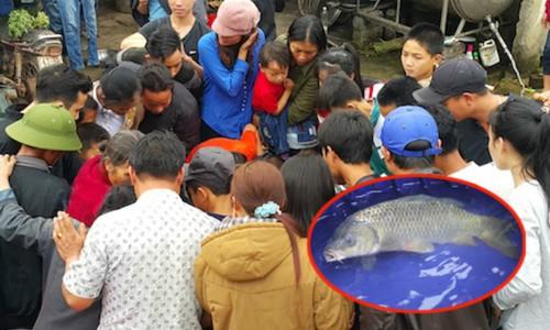 Hàng trăm người chen chúc sờ một con cá chép tại Nghệ An