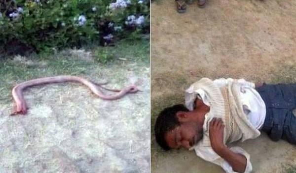 Bị rắn cắn, nông dân nhai luôn đầu rắn để trả thù