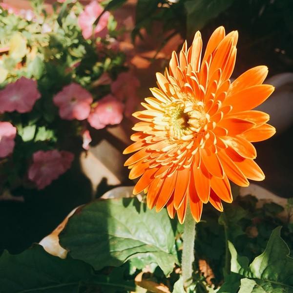 Nhiều người ghé thăm căn biệt thự của gia đình chị Dung đều thốt lên: Đẹp như tiên cảnh. Bà mẹ hai con mong ước những sắc màu rực rỡ của các loại hoa sẽ mang đến niềm vui, may mắn cho cả nhà trong năm mới.