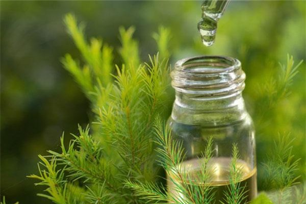 Sử dụng trên những vùng da chi chít sẹo lõm, tinh dầu tràm sẽ san phẳng chúng giúp bạn.