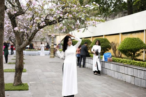 Áo dài trắng là trang phục rất phù hợp để chụp cùng với hoa ban trắng.