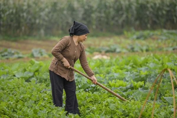 NSND Lan Hương đóng rất đạt trong vai bà mẹ quê.