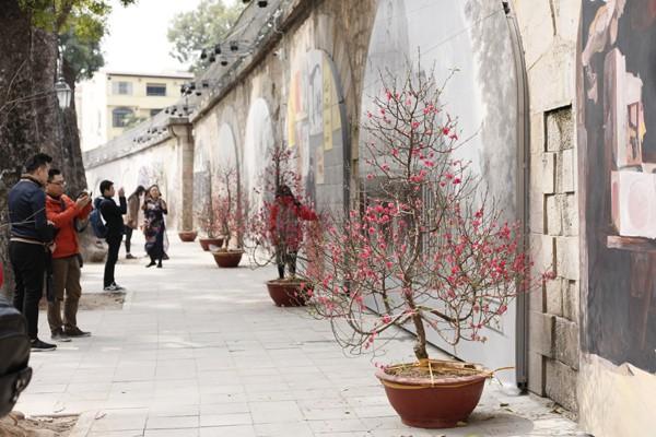 Đoạn phố bích họa được nhấn thêm bởi những cây đào tết đỏ rực.