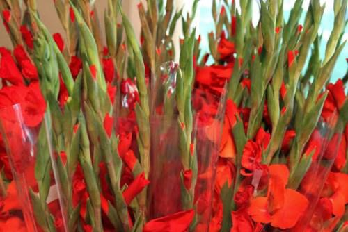 Chọn hoa lay ơn chơi Tết nên chọn hoa có nụ chưa nở, các nụ hoa đều màu.