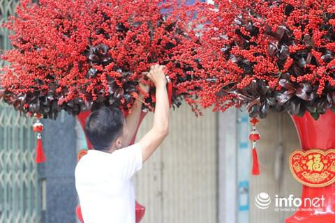 Đông đào đỏ bắt mắt bởi chi chít quả đỏ chín mọng.