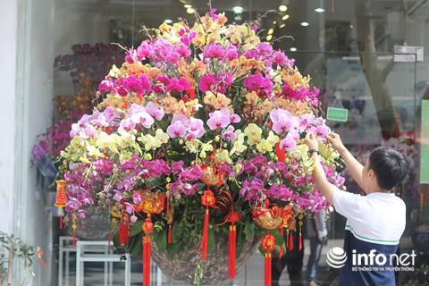 Chậu lan Hồ điệp được cắm 8 tầng hoa, 7 màu, bán với giá 80 triệu đồng.