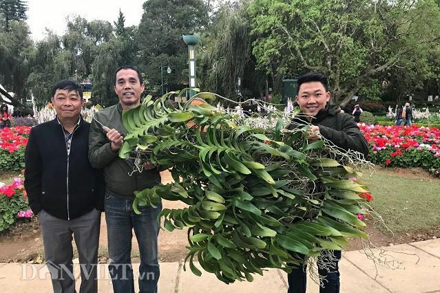 Giò lan Quế lan hương khủng được anh Nguyễn Anh Sơn đã bán cho một khách hàng ở Nam Định với giá 100 triệu đồng.