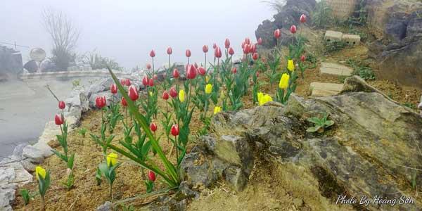 Anh Sơn xây dựng vườn hoa trên quả đồi đối diện với điểm dừng chân Mã Pì Lèng.