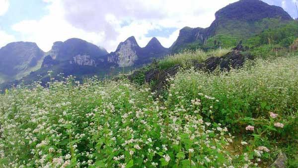 Điều kiện khí hậu ở Hà Giang không thuận lợi cho các loại hoa như hoa hồng, dạ yến thảo,...