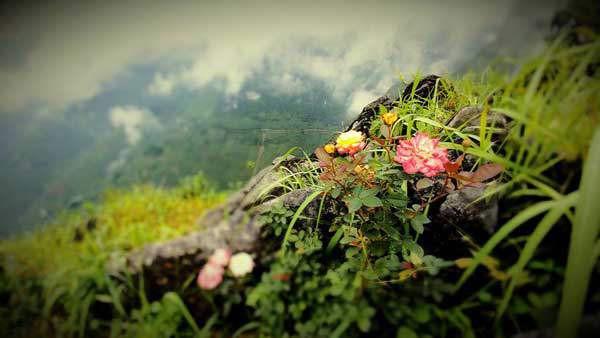 Những bông hoa nở mang một vẻ đẹp khác của vùng núi đá Hà Giang.